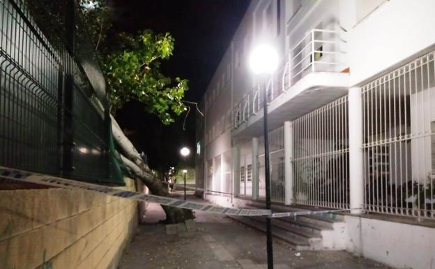 Un árbol cae sobre la valla del instituto Augustóbriga de Navalmoral