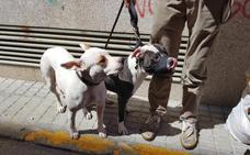 Denunciado en Badajoz por llevar dos perros peligrosos sin bozal