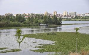 Denuncian ante el Seprona vertidos de «aguas negras y pestilentes» en el río Guadiana