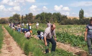 De escombrera a huerto ecológico en Mengabril