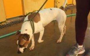 SOS Perrera de Badajoz busca adoptantes para evitar que sacrifiquen varios perros