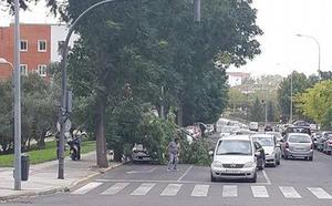 Los vecinos piden que se poden los árboles de la calle Rivilla de Badajoz