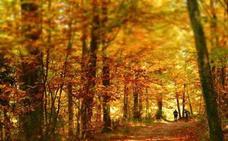 El Valle del Ambroz recibirá al otoño con una gran fiesta