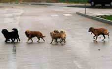 El Ayuntamiento de Badajoz ofrecerá servicio de recogida de animales permanente