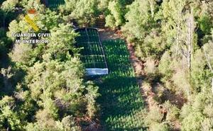 Desmantelada una plantación con 4.600 plantas de marihuana en un parque natural de Guadalajara