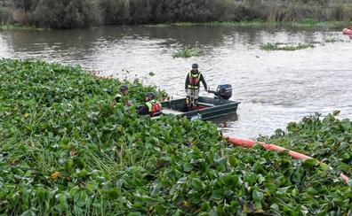 Casi 50 especies invasoras causan graves deterioros en Extremadura