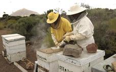 La sequía y un parásito dibujan un futuro incierto para el sector apícola extremeño