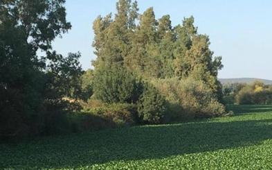 SOS Guadiana alerta sobre el camalote en zonas como Valdetorres, Villagonzalo o La Zarza