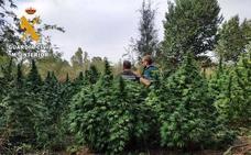 Marihuana en una isla del Guadiana
