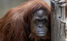 Sandra logra salir del zoo