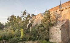La Confederación Hidrográfica del Guadiana talará los árboles que dañan el Puente de Palmas