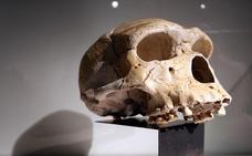 El cráneo humano, único de un mamífero que sigue la 'proporción áurea' de Leonardo da Vinci
