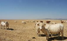 Agricultura invertirá un millón de euros para paliar la sequía llevando agua a las ganaderías