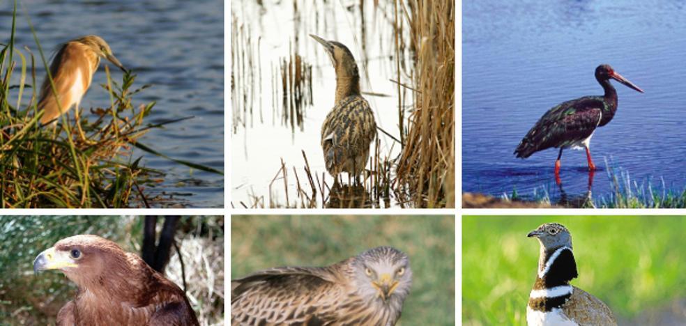 SEO/Birdlife propone ampliar la lista de aves en peligro de extinción