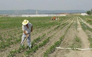 Sánchez facilitará el acceso al subsidio agrario a los extremeños