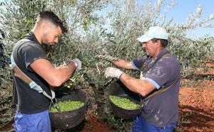13.300 eventuales del campo cobran el subsidio agrario en Extremadura