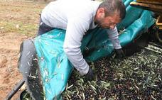 El sector olivarero se manifiesta en Madrid ante la crisis de precios y los aranceles