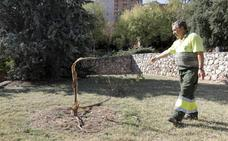 Mobiliario y plantas del Parque del Príncipe de Cáceres sufren el azote del vandalismo