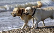 Tener un perro mejora ostensiblemente la vida de los humanos, lo confirma la ciencia