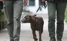 En la provincia de Cáceres hay un perro peligroso por cada 102 habitantes