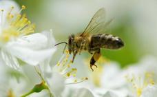 Las personas y las abejas se van del campo