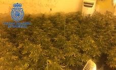 Detenido por cultivo de marihuana en una casa de la barriada pacense de San Roque