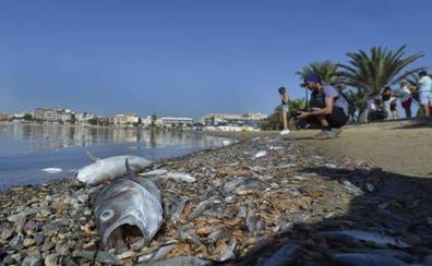El Mar Menor, en situación «crítica» tras las riadas por la gota fría