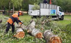 Comienza la tala de 21 árboles en la Isla «por riesgo inminente de caída»