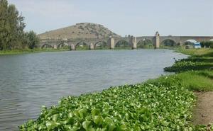 Finaliza la retirada de camalote entre Villanueva de la Serena y el badén de Valdetorres