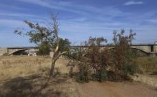 La rama caída de un árbol en el camino peatonal a Alange impide el paso de bicis
