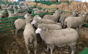 33.166 agricultores comienzan a recibir el pago básico de la PAC