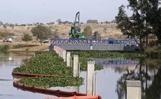 Los diques construidos evitan que el camalote invada el tramo del Guadiana a su paso por Mérida