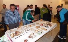 Las jornadas micológicas se celebrarán en noviembre