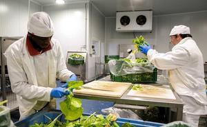 La Junta destina 9 millones de euros a los productores de frutas y hortalizas