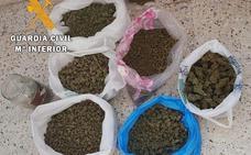 Detienen e investigan a trece personas por cultivo y venta de marihuana en la provincia de Cáceres