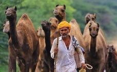 Comerciantes de camellos durante la Feria Pushkar 2019
