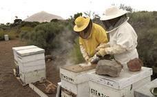 Apicultores extremeños piden al Gobierno que peleen por incluir el lugar de origen de la miel