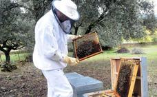 Los apicultores insisten en que el origen de la miel aparezca en las etiquetas