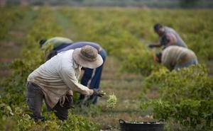 La patronal del campo dice que no podrá pagar el nuevo salario mínimo