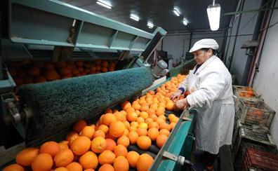 Las naranjas extremeñas crecen a la orilla del Guadiana