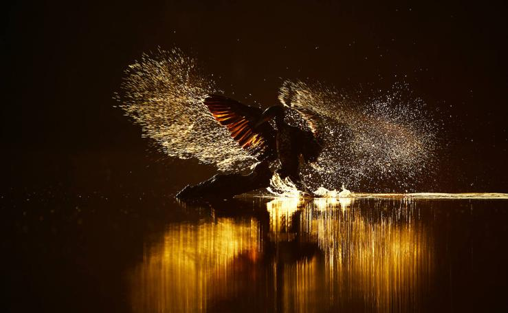 El concurso fotográfico de FIO anuncia sus ganadores
