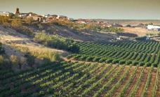 Mucho viñedo ecológico y poco consumo