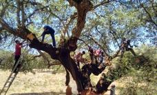 El Instituto del Corcho organiza un webinar dedicado a la gestión de forestaciones agrarias