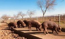 Agricultura impulsa la creación de un centro nacional de referencia de bienestar animal