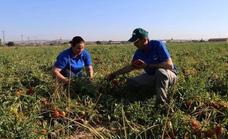Cooperativas Extremadura y Liberbank se unen para facilitar las finanzas de agricultores y ganaderos