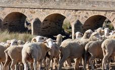 Lonja de Salamanca: los precios del ganado que se han acordado esta semana