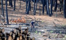 La Junta invierte en tratamientos silvícolas para prevenir incendios en Sierra de Gata