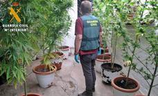 Detenido un matrimonio de La Zarza que cultivaba marihuana en su domicilio