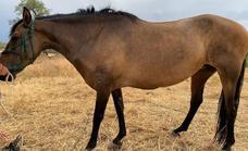 Sanidad ha detectado ántrax en animales de seis localidades extremeñas