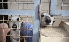 La Fiscalía pide 50 años de cárcel para una veterinaria por sacrificar perros sanos